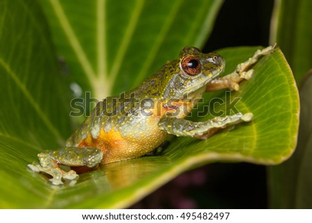 Frog Stock Images RoyaltyFree Images Vectors Shutterstock