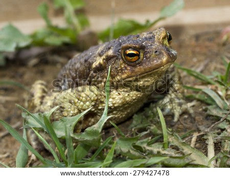 beautiful frog sitting on the ground among  green grass and old leaves - stock photo