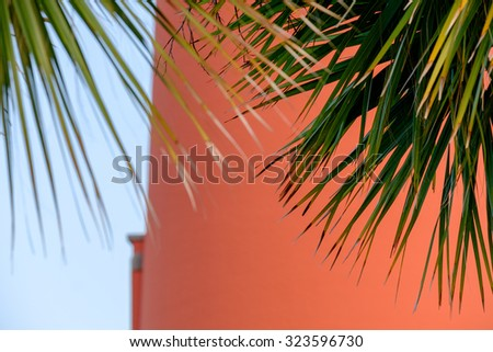 Beautiful fronds of Florida Palm trees with the Ponce De Leon Lighthouse as a backdrop - stock photo