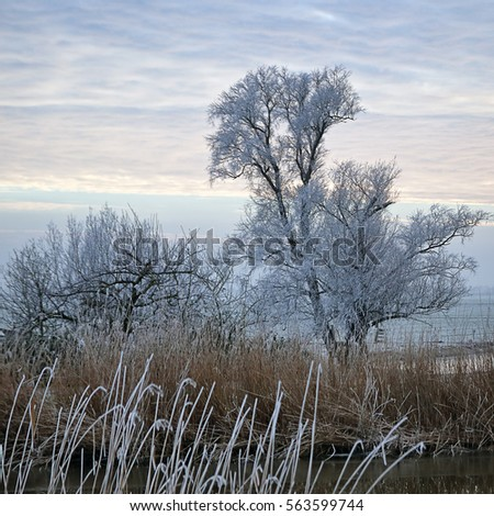 Beautiful frozen trees in the Dutch countryside