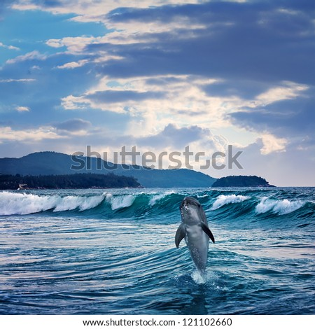 beautiful funny dolphin jumping up from sea surface - stock photo
