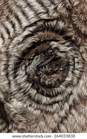 Beautiful fur shawl  - stock photo