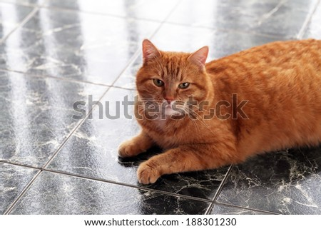 Beautiful furry cat on the marble tile - stock photo
