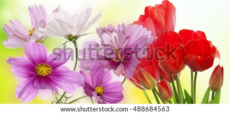 Beautiful garden flowers on abstract  background