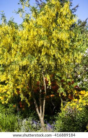 Beautiful garden in spring   - stock photo
