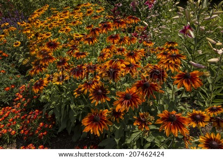 Beautiful garden of red and orange coneflowers. - stock photo