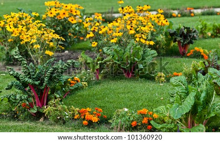 Beautiful garden with leafy vegetables and bright colored flowers - stock photo