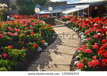Beautiful garden with red geranium flowers