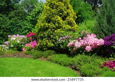 Beautiful garden with rhododendron  - fresh colors of spring