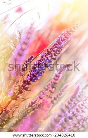 Beautiful, gentle purple flower - stock photo