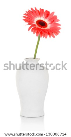 Beautiful Gerber flower isolated on white