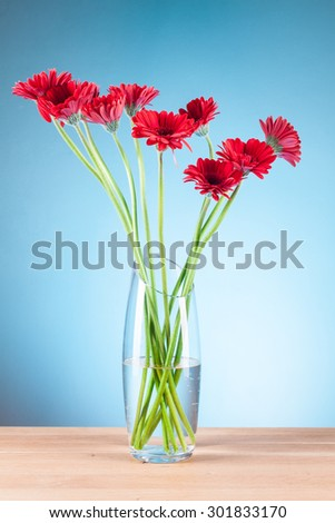 beautiful Gerbera on blue background