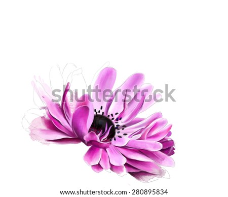 Beautiful gerbera, with elements of the sketch, isolated on white background, Watercolor painting - stock photo