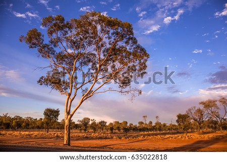 Ghost Gum Tree Stock Images, Royalty-Free Images & Vectors | Shutterstock