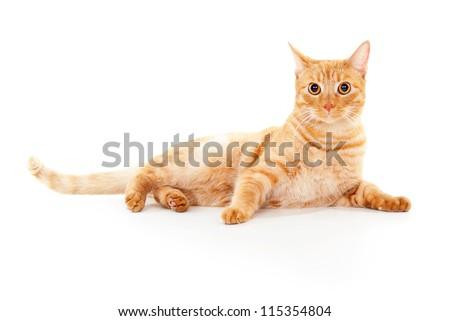 beautiful ginger cat lying isolated - stock photo