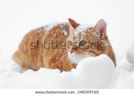 Beautiful ginger cat on snow background - stock photo