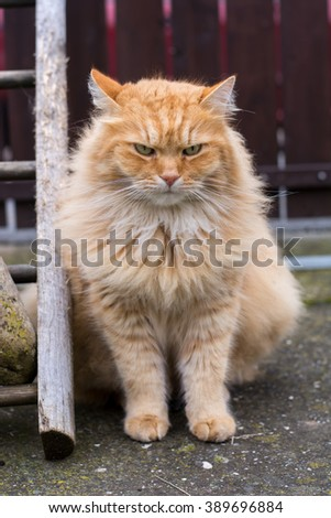Beautiful ginger cat on the garden - stock photo
