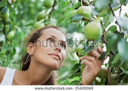 Beautiful girl picking the pear in the garden - stock photo