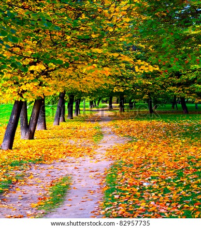 beautiful golden alley - stock photo
