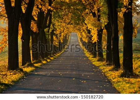 Beautiful golden autumn alley - stock photo
