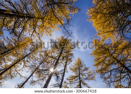 Beautiful golden autumn forest with yellow leaves. - stock photo