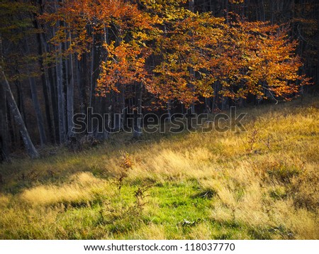 Beautiful golden autumnal colors of a tree and grass - stock photo