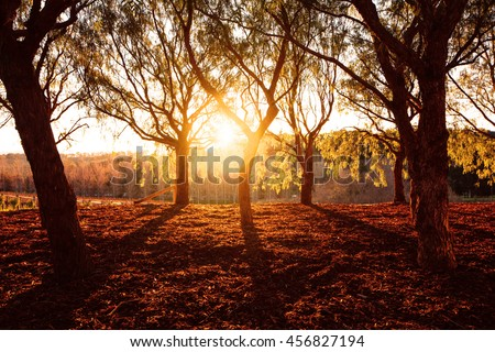Beautiful golden dry park view in the forest in sunny day, warm yellow sunset light, fall season - stock photo