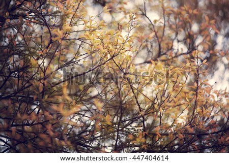 Beautiful golden forest,Soft focus and retro color toned. - stock photo