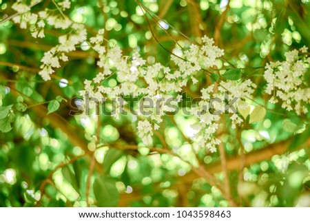 Beautiful good smell little white flowers stock photo edit now beautiful good smell little white flowers bridal creeper snow creeper blooming in garden and green mightylinksfo