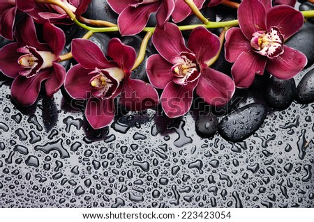 beautiful gorgeous red branch orchid on wet back stones background  - stock photo