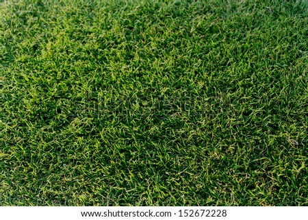 Beautiful grass - stock photo