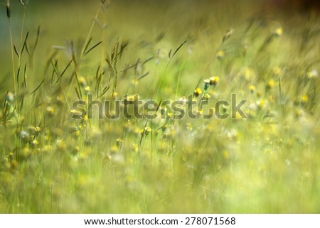 Beautiful Grass flower - stock photo