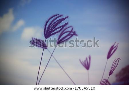 Beautiful Grass flower vintage style - stock photo