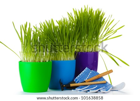 beautiful grass in a flowerpots, garden tools and gloves isolated on white - stock photo