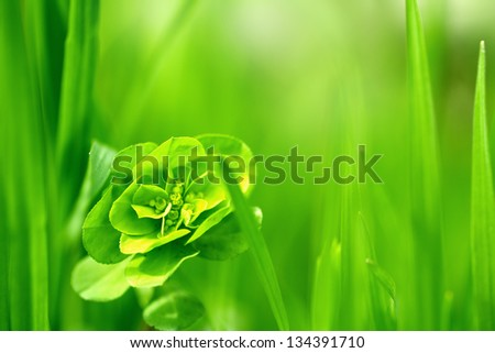 beautiful grass on the nature - stock photo