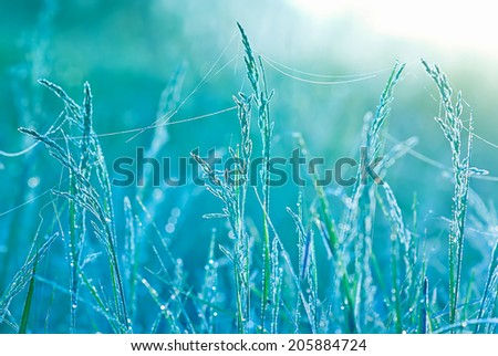 Beautiful grass with water drops. Shallow depth of field  - stock photo