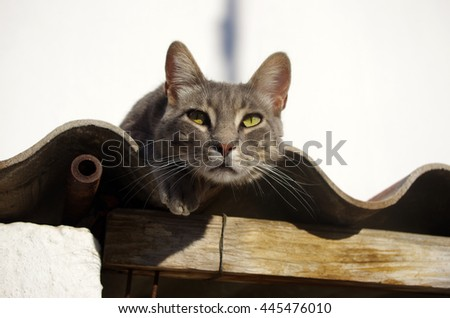Beautiful gray cat sitting on a roof looking suspicious - stock photo