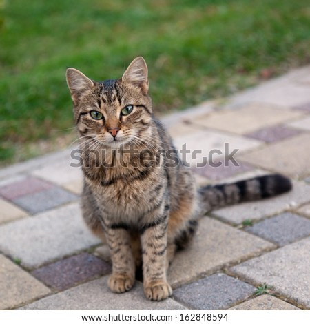 beautiful gray cat sitting on the sidewalk in soft focus - stock photo