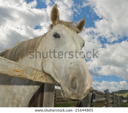 Beautiful gray horse hanging his head over a wooden fencline with a dramatic blue sky in the background. - stock photo