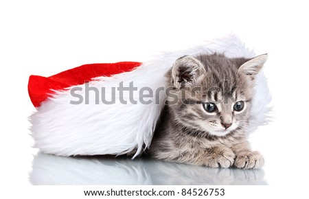 Beautiful gray kitten and Christmas hat isolated on white - stock photo