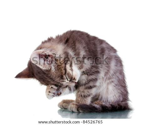 Beautiful gray kitten isolated on white - stock photo
