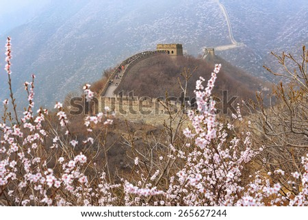 Beautiful great wall of China in spring season with cherry blossoms on foreground - stock photo