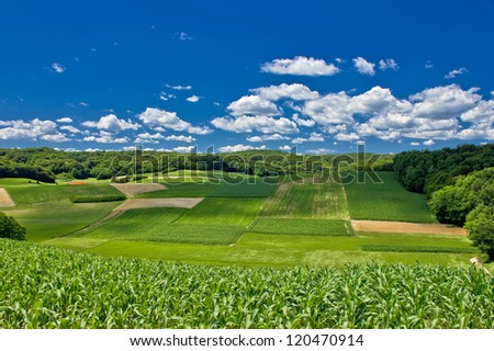 Beautiful green agricultural landscape in Croatia, corn and hay fields - stock photo