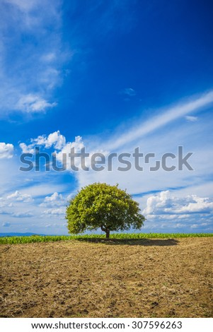 Beautiful green and blue landscape of nature, tree and sky with clouds
