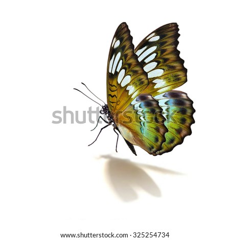 Beautiful green and yellow butterfly isolated on white background