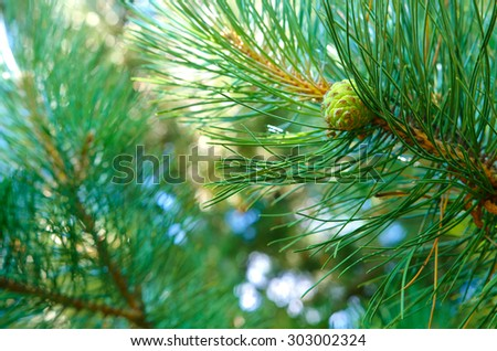 Beautiful green background and one conifer cone - stock photo