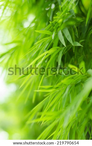 Beautiful green bamboo leaves warm - stock photo