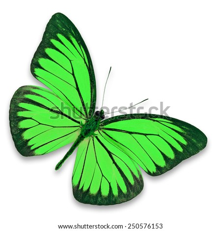 Beautiful green butterfly isolated on white background