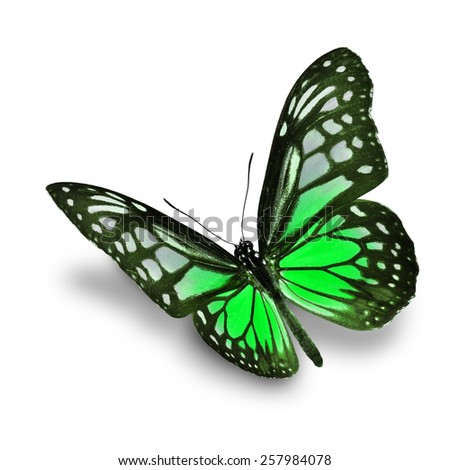 Beautiful green butterfly isolated on white background - stock photo