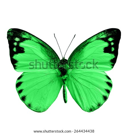 Beautiful Green butterfly, Lesser Albatross in fancy color profile with the upper wing part isolated on white background